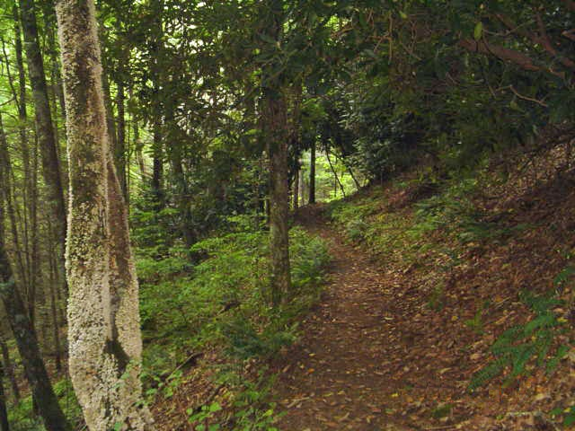 Trail leading to Winding Stair Gap2