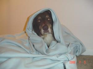 Canine Madonna