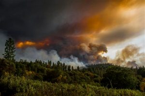 Smoke rises from a fire near Butte Mountain Road, Thursday Sept. 10, 2015, near Jackson, Calif. Lions, tigers and other cats big and small are being evacuated as California's biggest wildfire continues to spread, possibly threatening the park where they live, officials said Thursday. (Andrew Seng/The Sacramento Bee via AP) MAGS OUT; LOCAL TELEVISION OUT (KCRA3, KXTV10, KOVR13, KUVS19, KMAZ31, KTXL40); MANDATORY CREDIT