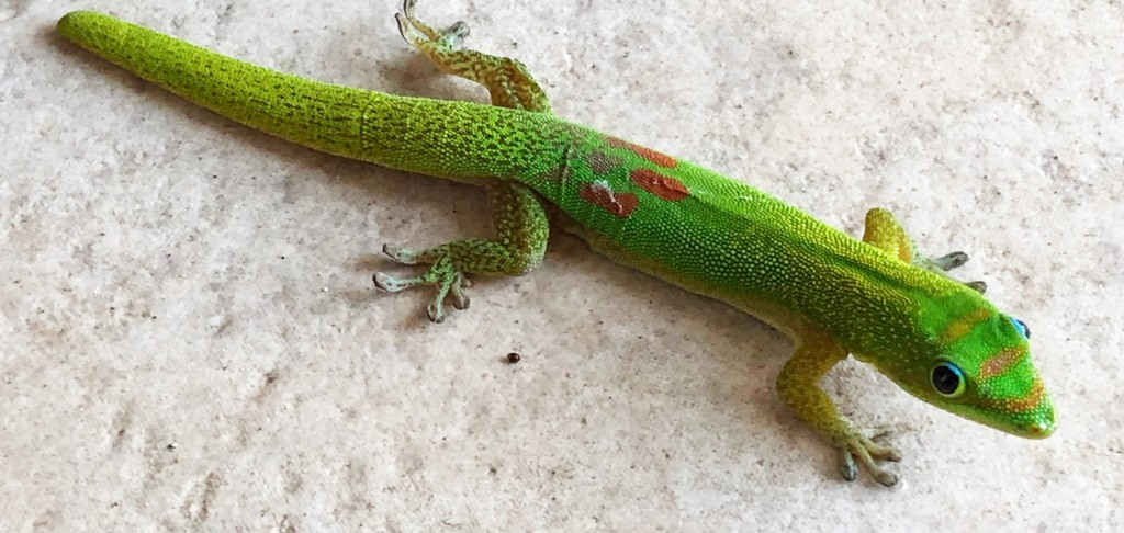 gary the gecko 3