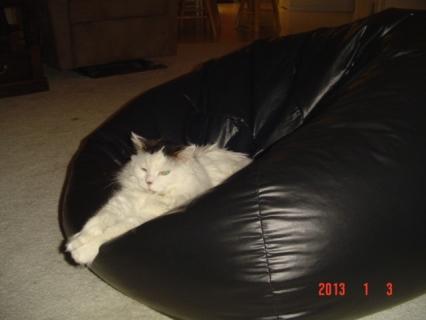 Beanbag Pussy