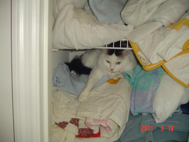 Camoflaged Cat